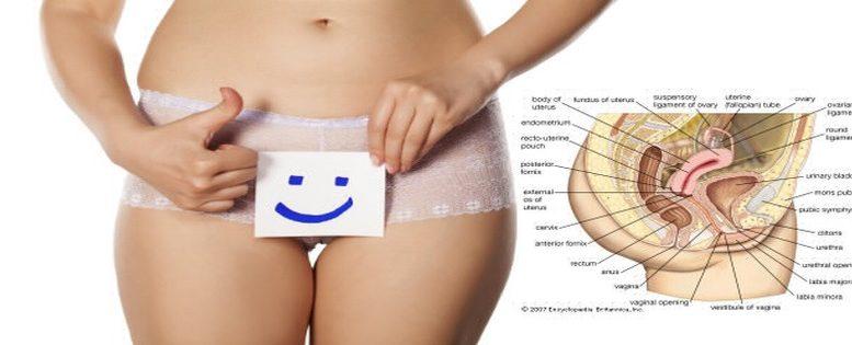anatomie-du-clitoris