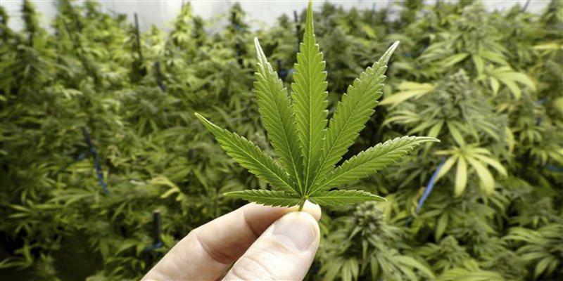 marijuana-et-dysfonction-sexuelle