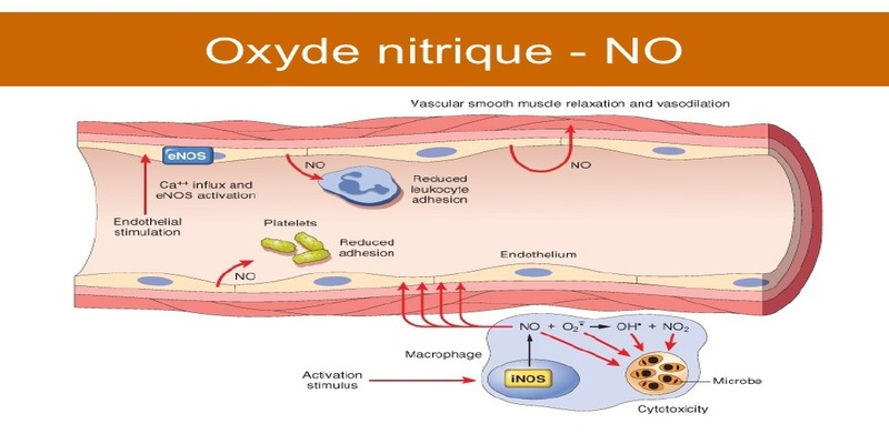 oxyde-nitrique